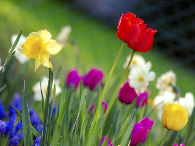 Spring: nature's call to action