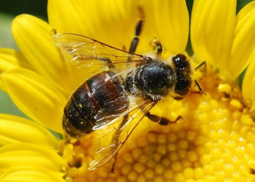 Bees Overcome the Impossible